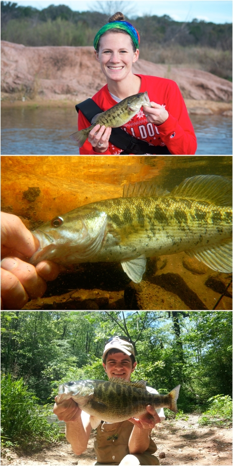 The Native Black Bass Initiative is currently addressing conservation and management needs for the Guadalupe Bass in Texas (top), Bartram's Bass in Georgia and South Carolina, and Shoal Bass in Georgia, Alabama, and Florida.
