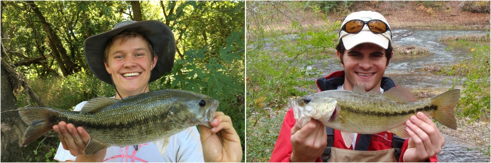 These two fish represent distinct species, but are incredibly similar in appearance. Could you tell them apart? Answer: Spotted Bass (left) and Alabama Bass (right).