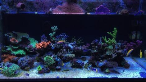 home-aquarium