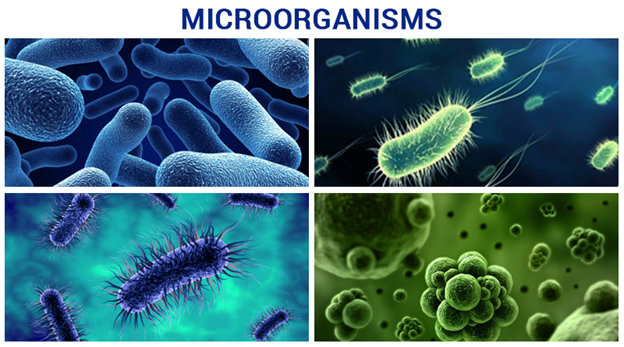 the harmful effects of bacteria in our daily lives How does bacteria affect our lives and 'harmful' bacteria what is one way chemistry affects our daily lives.