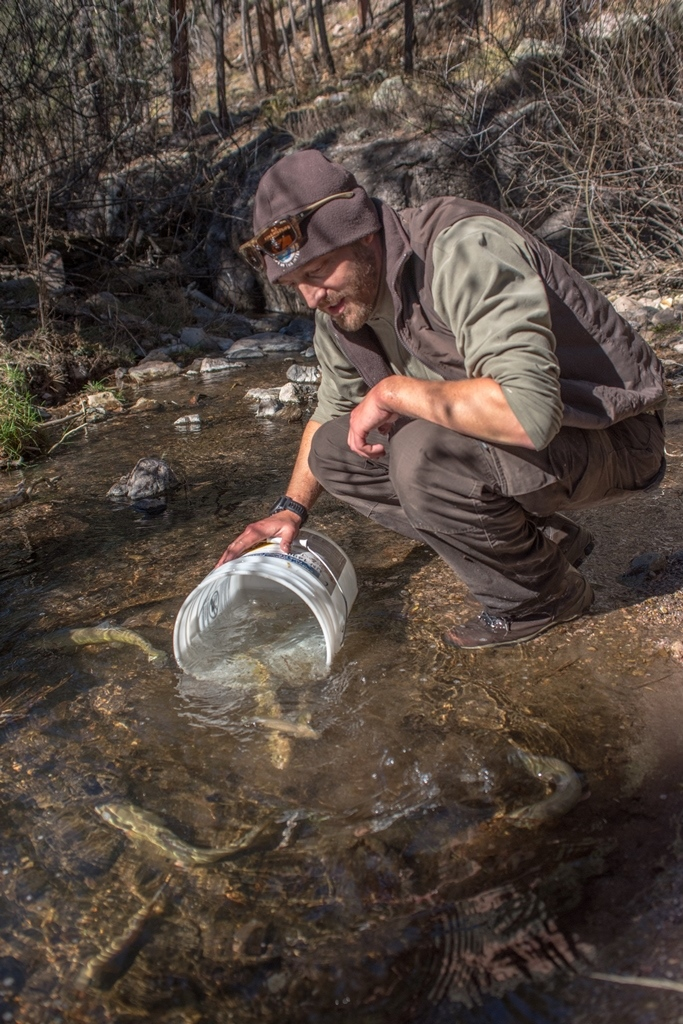 Andy Dean-Gila trout biologist New Mexico Fish and Wildlife Conservation Office-releases Gila trout into Mineral Creek photo Craig Springer USFWS resized.jpg