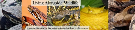 AlongsideWildlife