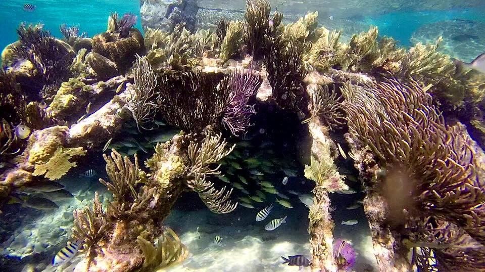 Cayman Reef