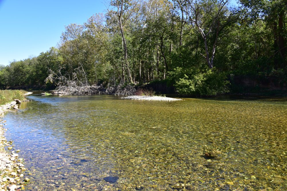 Large masses of woody debris yields habitiat for Neosho smallmouth bass habitat northeast Oklahoma. Research was funded by the Wildlife and Sport Fish Restoration Program. Photo credit