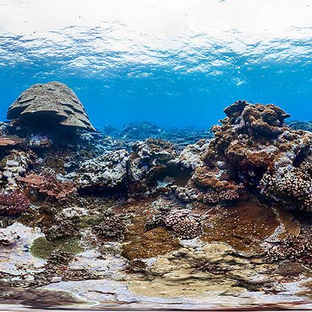 coral reef at fagatele bay, american samoa